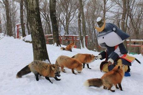 La mascotte del villaggio da da mangiare alle volpi.